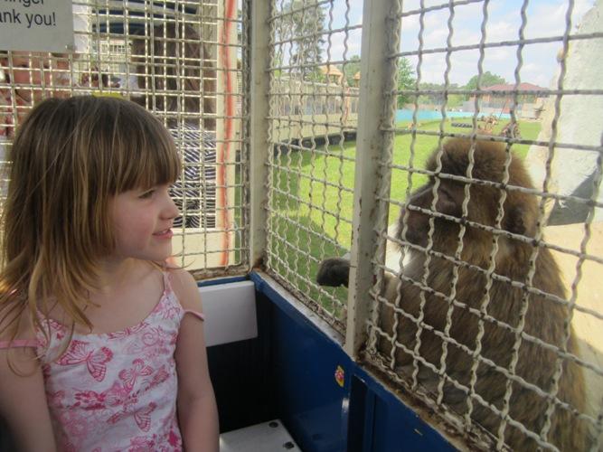 Ausflugs-Tipp: der Safaripark in Stukenbrock