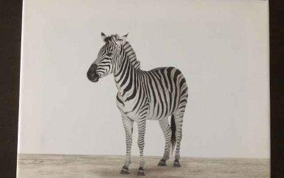 ArtyAnimals 4 400x250 - Produkttest: Leinwandbilder von ArtyAnimals