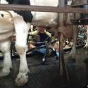 Bauernhofbesichtigung Tossens 2 125x125 - Familien-Urlaubs-Tipp: Center Parcs Nordseeküste