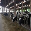 Bauernhofbesichtigung Tossens 4 125x125 - Familien-Urlaubs-Tipp: Center Parcs Nordseeküste