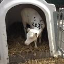 Bauernhofbesichtigung Tossens 5 125x125 - Familien-Urlaubs-Tipp: Center Parcs Nordseeküste
