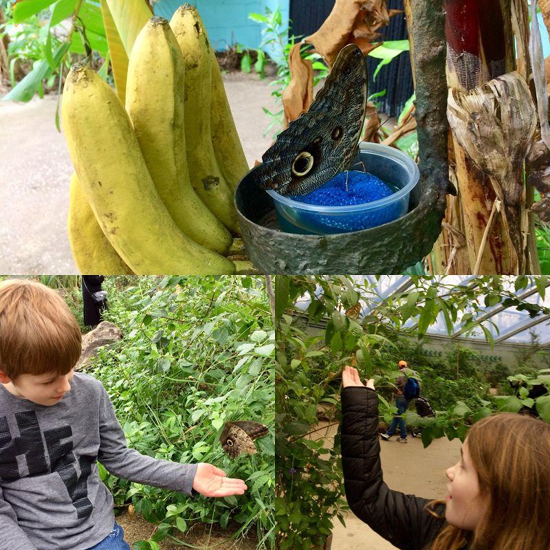 Burgers Zoo Erfahrungsbericht 2 - Ausflugstipp: Burgers Zoo in Arnheim