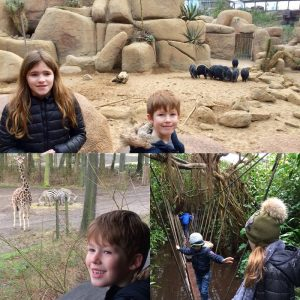 Burgers Zoo Erfahrungsbericht 5 300x300 - Ausflüge