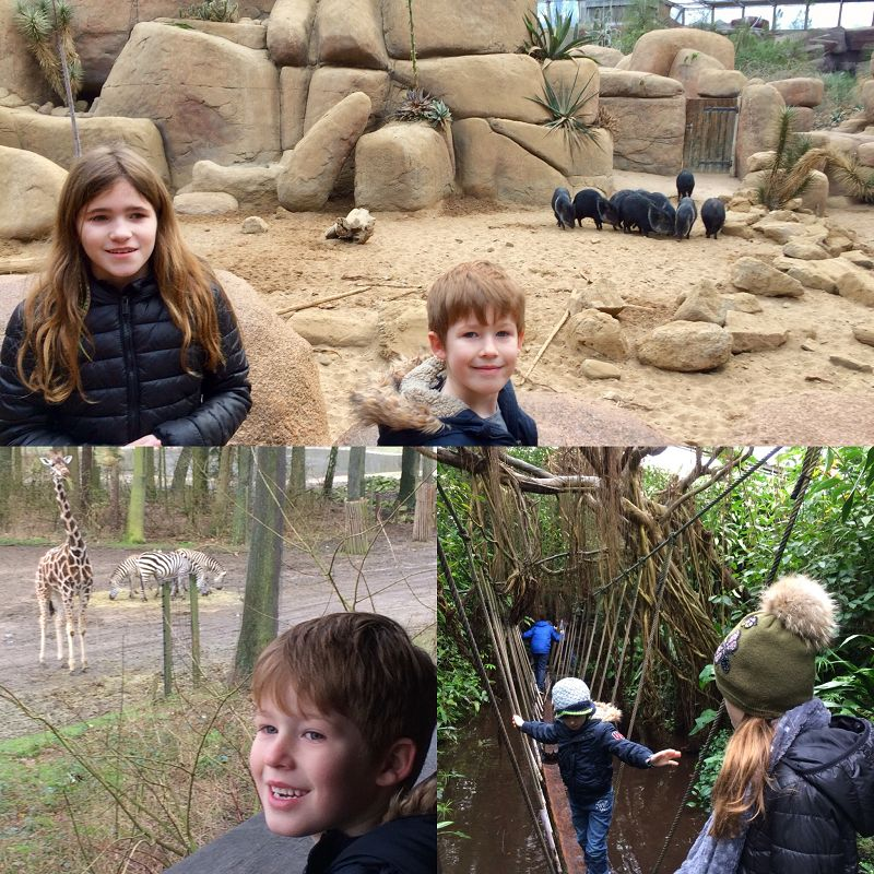 Burgers Zoo Erfahrungsbericht 5 - Ausflugstipp: Burgers Zoo in Arnheim