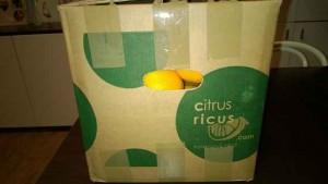 CitrusRicus (1)