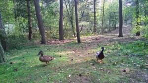 Erfahrungsbericht Center Parcs Het Heijderbos 10 300x169 - Familienurlaub im Center Parcs Het Heijderbos