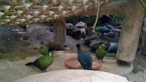 Erfahrungsbericht Center Parcs Het Heijderbos 35 300x169 - Familienurlaub im Center Parcs Het Heijderbos