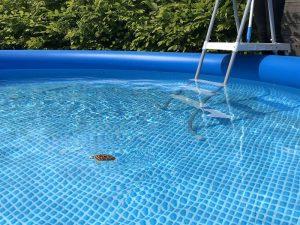 Goliath Robo Turtle Wasserschildkröte 2 300x225 - Produkttest: Goliath Robo Turtle Wasserschildkröte