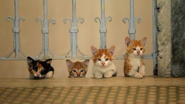 Katzen und ihre Allergien
