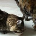Purina One im Test 3 125x125 - PURINA ONE Katzennahrung im Test