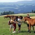 Reiten kl 125x125 - beendet - Gewinnspiel - Familienurlaub auf dem Bauernhof und Freizeit-Paket