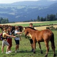 Reiten kl Kopie - beendet - Gewinnspiel - Familienurlaub auf dem Bauernhof und Freizeit-Paket