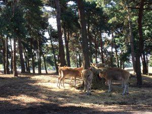 Safaripark und Speelland Beekse Bergen 4 300x225 - Ausflugstipp: Safaripark und Speelland Beekse Bergen