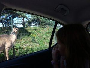 Safaripark und Speelland Beekse Bergen 5 300x225 - Ausflugstipp: Safaripark und Speelland Beekse Bergen