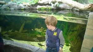Sea Life Hannover (1)