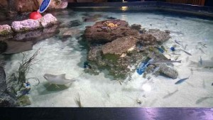 Sea Life Hannover (4)