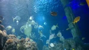 Sea Life Hannover