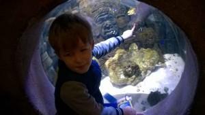 Sea Life Hannover (8)