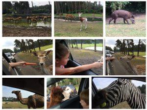 Serengeti Park Collage 01