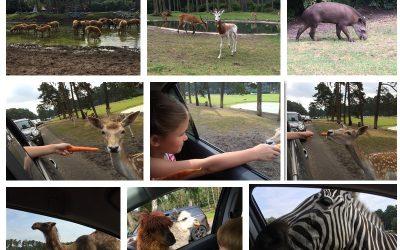 Serengeti Park Collage 01 400x250 - Ausflugstipp: Der Serengeti Park in Hodenhagen