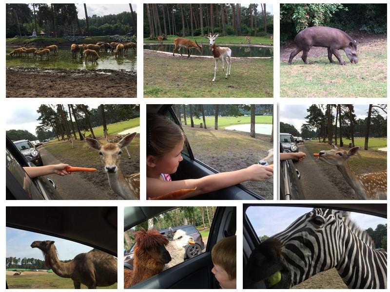 Serengeti Park Collage 01 - Ausflugstipp: Der Serengeti Park in Hodenhagen