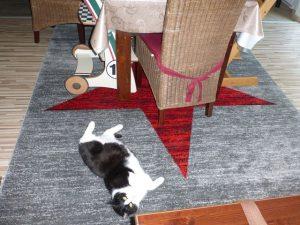 Teppich von Vimoda Homestyle 13 300x225 - Produkttest: Teppich von Vimoda Homestyle