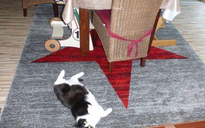 Teppich von Vimoda Homestyle 13 400x250 - Produkttest: Teppich von Vimoda Homestyle