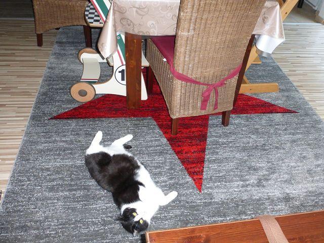 Teppich von Vimoda Homestyle 13 - Produkttest: Teppich von Vimoda Homestyle