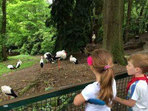 Weltvogelpark Walsrode (10)