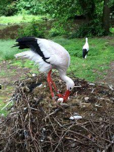 Weltvogelpark Walsrode (11)