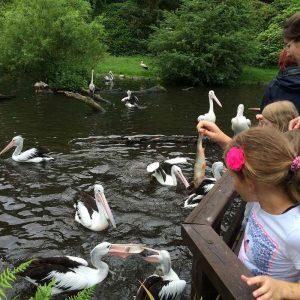 Weltvogelpark Walsrode (15)