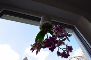 boskke Blumentopf 3 300x200 - Produkttest: boskke Sky Planter von Greenbop