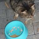 k P1070579 125x125 - Katzenfutter Tester gesucht - Felix Katzenfutter im Test