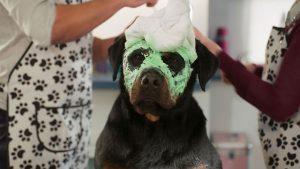 k Show Dogs Szenenbilder 10 300x169 - Adventskalender Tür 8: tubotec Dosierspender und SHOW DOGS