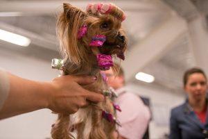 k Show Dogs Szenenbilder 11 300x200 - Adventskalender Tür 8: tubotec Dosierspender und SHOW DOGS