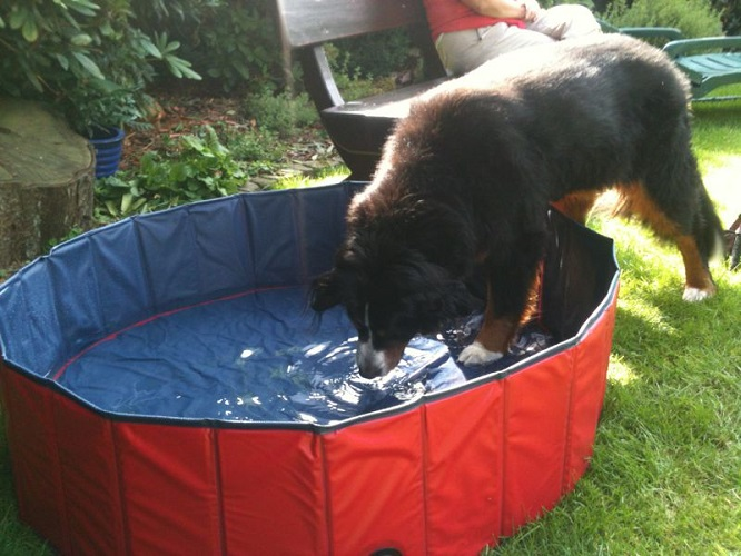 karlie doggy pool (1)