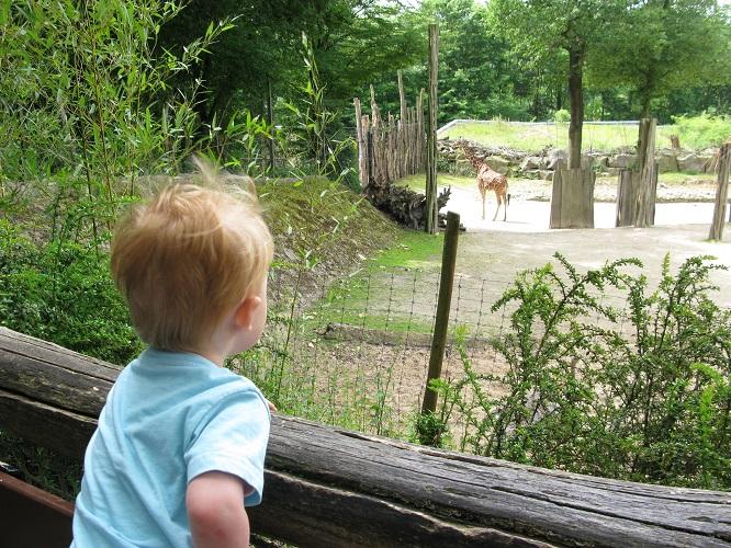 zoo osnabrück (2)